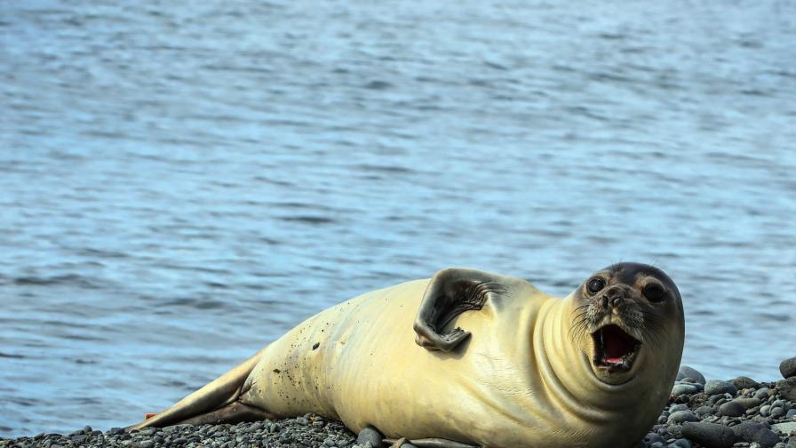 Криза с  туристите на Антарктида