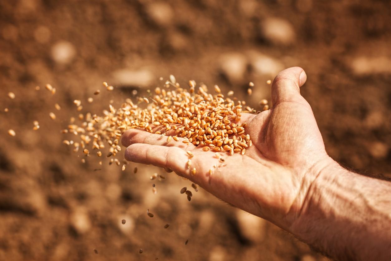 <p><strong>Пшеница</strong></p>  <p>Любимите ни тестени изкушения&hellip;</p>