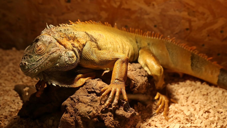 <p>В Музейко са изложени някои от най-отровните змии в България и света и със сигурност ще привлекат вниманието на малки и големи зоо любители.</p>