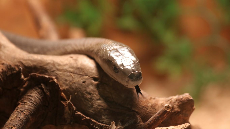 <p>Освен с влечуги - змии, игуани и хамелеони, в рамките на &ldquo;Пълзящи експонати&rdquo; можем да се запознае отблизо и с паяци, скорпиони и хлебарки.</p>