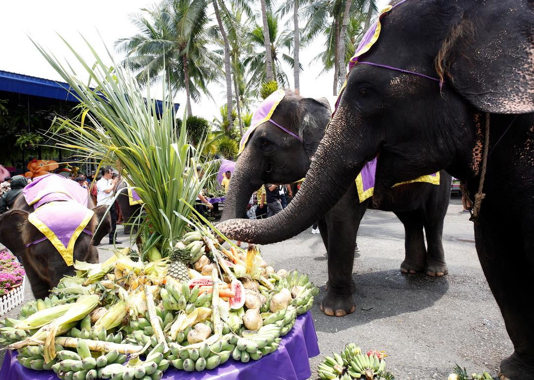 <p>Според Министерството на националните паркове, опазване на дивата природа и растенията (DNP), в Тайланд се наблюдава сериозен спад в броя на слоновете, като в момента около 3,440 диви слона живеят естествено в страната.</p>