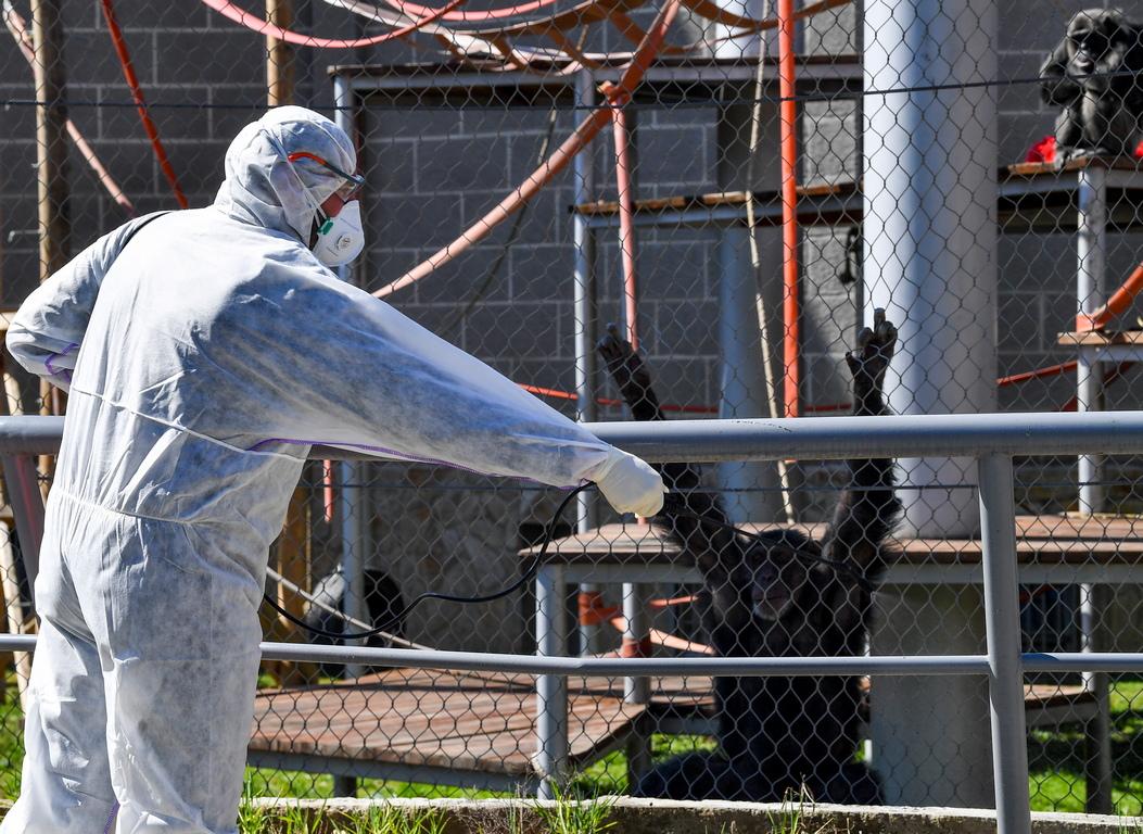<p>Това съобщи здравният министър Венко Филипче. Той уточни, че новите седем заразени са от град Дебър и Скопие.</p>  <p>Само през изминалото денонощие заразените в страната се увеличиха с 11 души.</p>