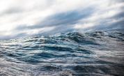<p>&quot;Спрете да убивате <strong>морския живот </strong>и той ще се&nbsp;възвърне&quot;, призовават учените</p>
