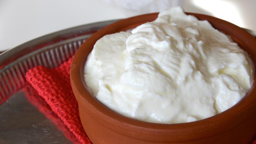<p>Как от българското кисело мляко не стана антибиотик</p>