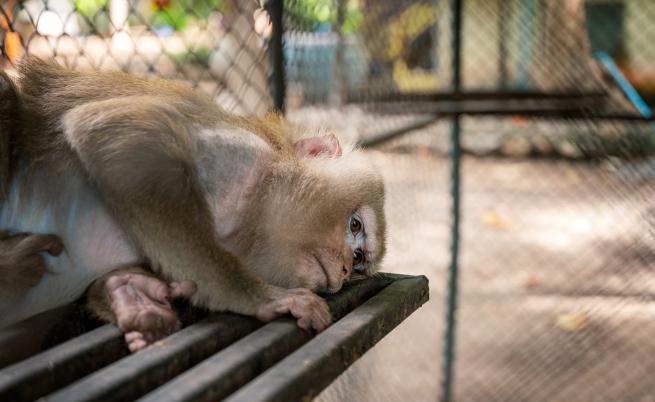 COVID-19: Животните в зоопарковете самотни без посетители