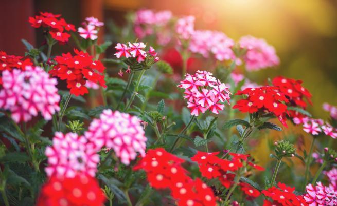 Двете стайни растения, които предпазват от вируси