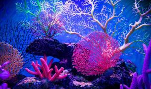 Кораловите рифове са под заплаха, силните циклони могат да ги увредят