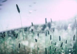 Дъждът не отмива полените