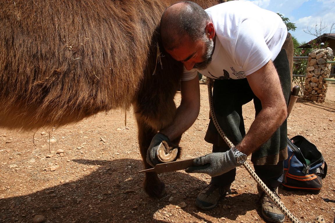 <p>В Гърция през 80-те години на миналия век е имало около 500 000 магарета, докато днес има само около 12 000.</p>