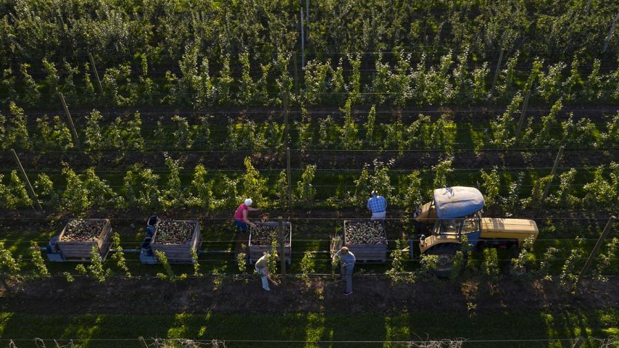 Безработните с възможност за трудова заетост на полето, без лишаване от помощи
