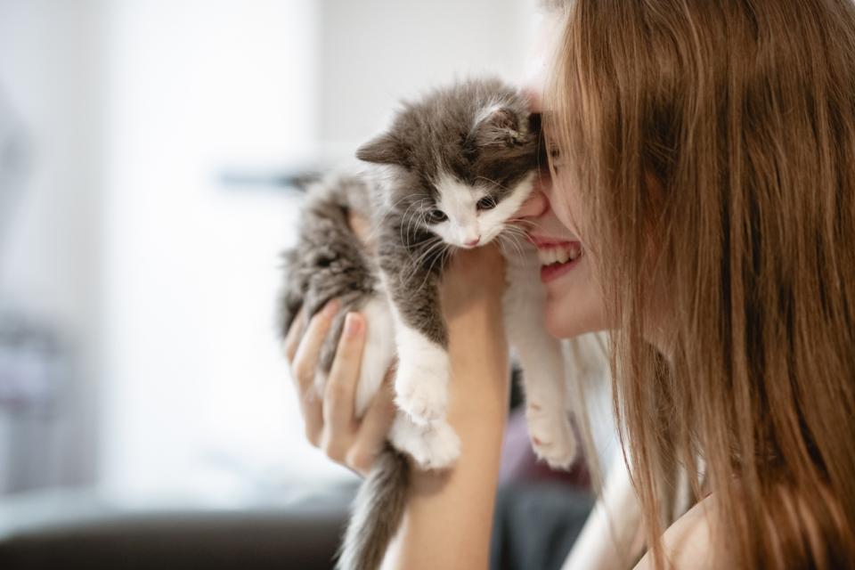 жена котка
