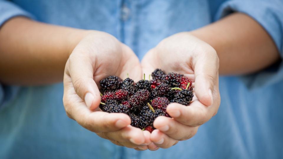 черница плод храна здравословно