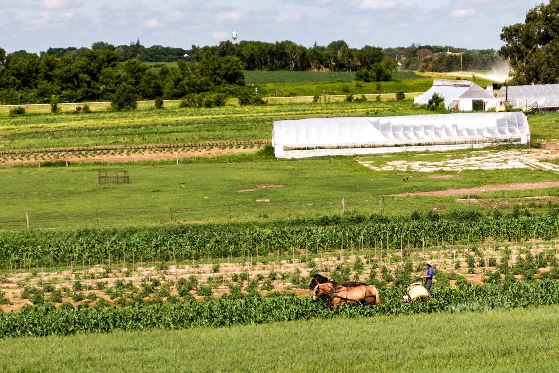 <p>Амиш ферма, в близост до Кантон, Минесота, САЩ</p>