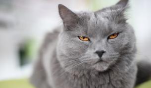 Котка уби стопанката си с целувка на смъртта - Свят | Vesti.bg