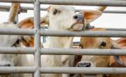 <p>Садистично отношение: Защо причиняваме това на животните?</p>