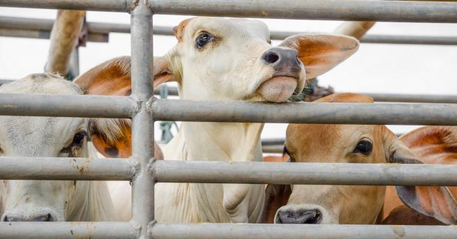 Свят DW: Садистично отношение: Защо причиняваме това на животните? Истински