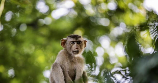 Свят Daily Mail: Маймуни убиха майка и четирите ѝ деца