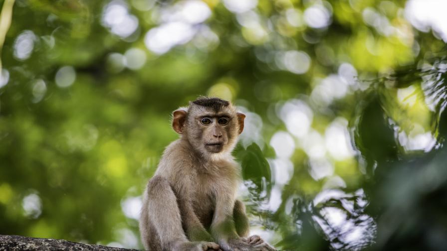 Daily Mail: Маймуни убиха майка и четирите ѝ деца в Индия