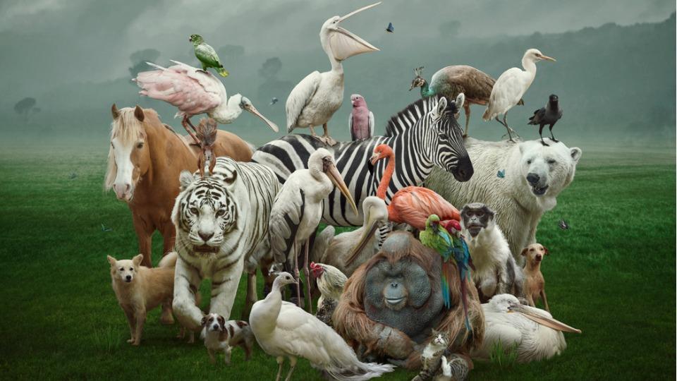 животни