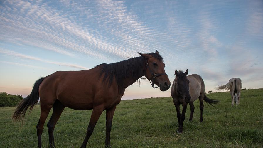 Убийства на коне в цяла Франция - сатанински ритуал или предизвикателство от социалните мрежи
