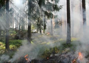 Силен вятър и висок риск от пожари в събота