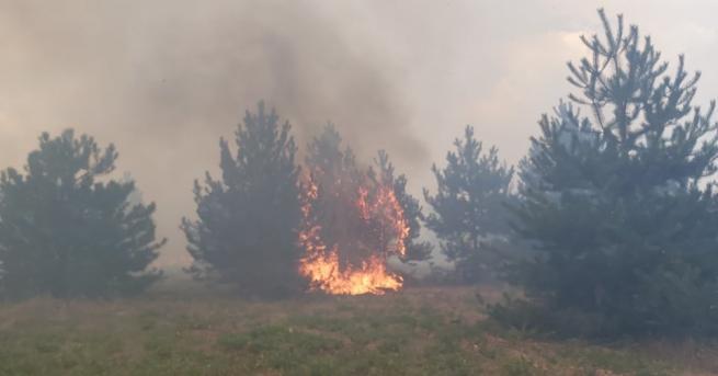 България Пожарът в Хасковско обхвана почти 100 000 дка площ