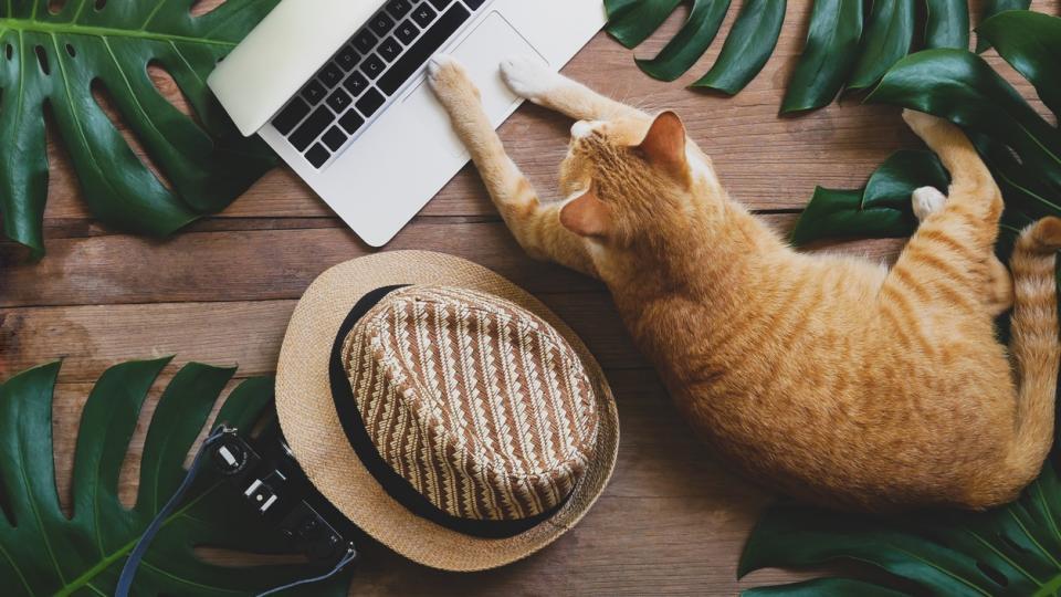 котка лято работа почивка лаптоп компютър шапка хороскоп
