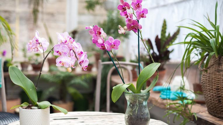 10 причини да отглеждаме орхидеи вкъщи