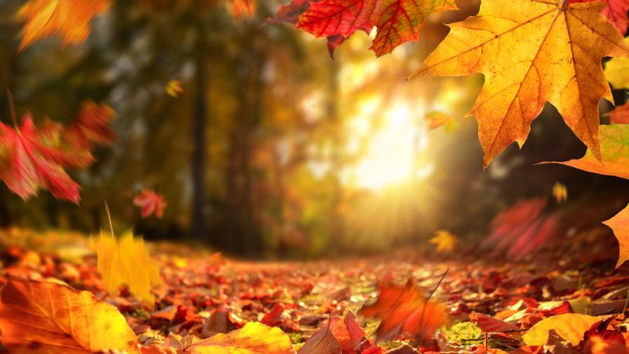 5 неща за есента, които може би не знаете