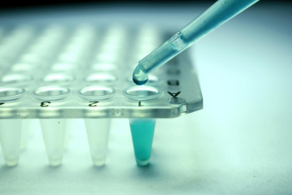 стволови клетки