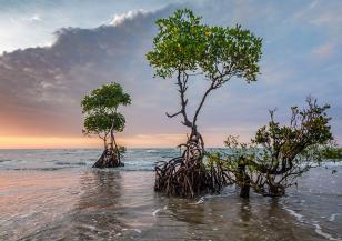 7 факта, които доказват, че сме изправени пред извънредна климатична ситуация