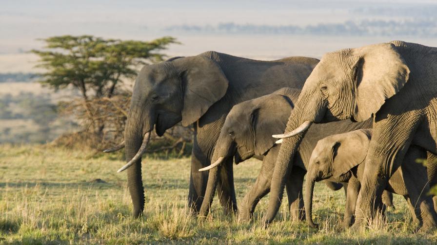 Животните, чиято бременност трае цяла вечност