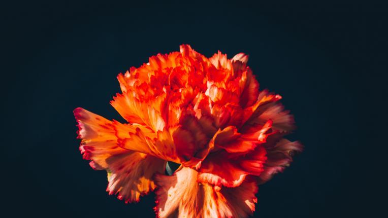 5 цветя с негативна символика