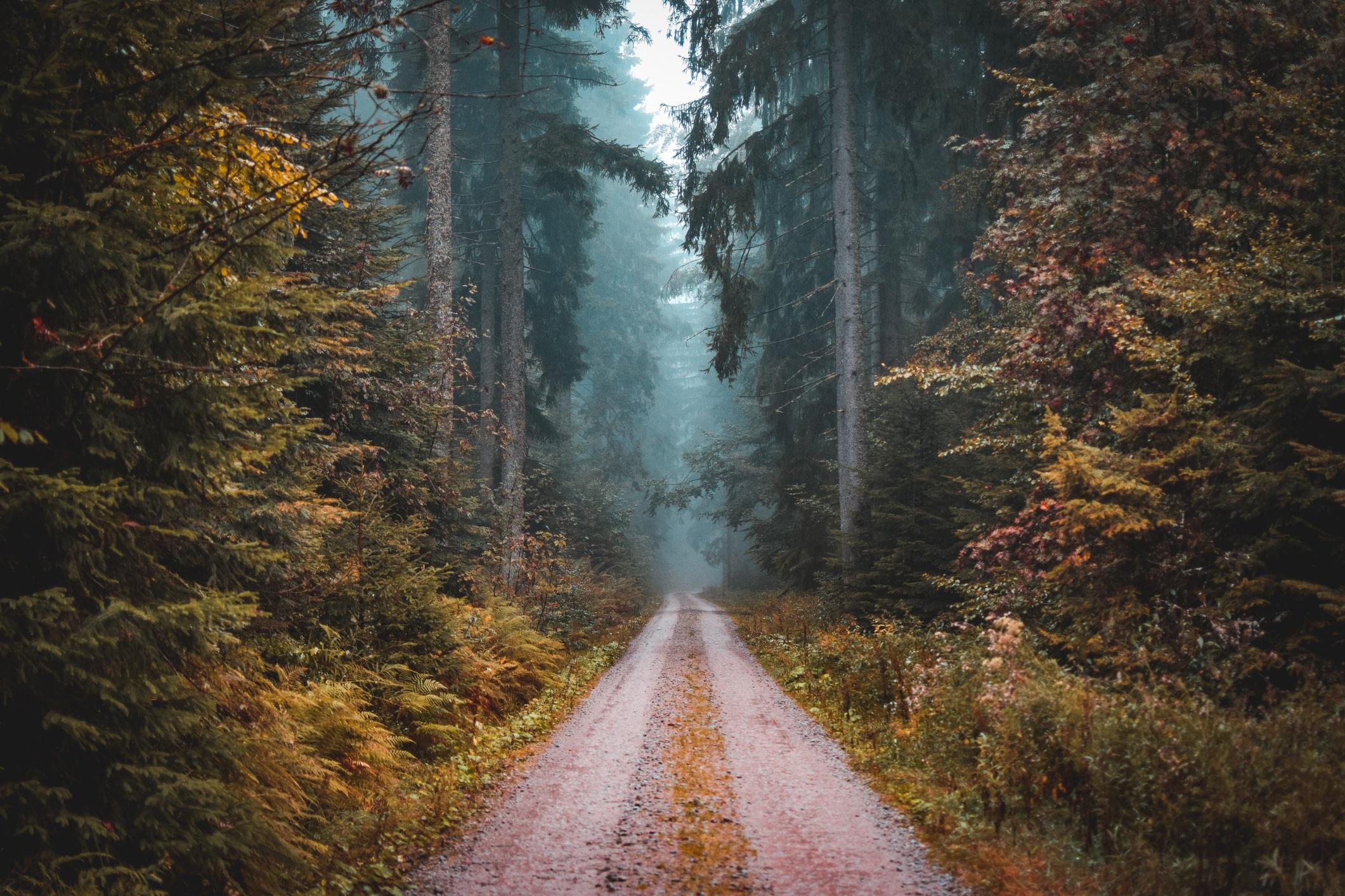 <p><strong>Черната гора в Германия</strong></p>  <p>Името ѝ вече звучи зловещо, но братя Грим затвърждават репутацията ѝ на &bdquo;обитавана&rdquo; гора, използвайки я за декор за много от приказките си като Хензел и Гретел например.</p>