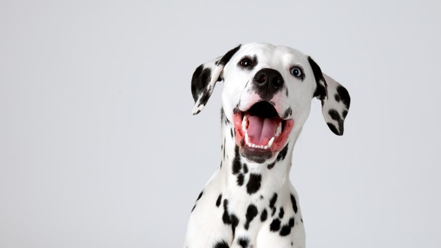 Кученце се обучава да стане пожарникар (ВИДЕО)