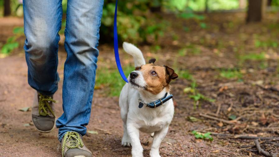 Пренасят ли домашните любимци COVID-19, мнението на ветеринарите