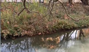 Река Струма се оцвети в бяло