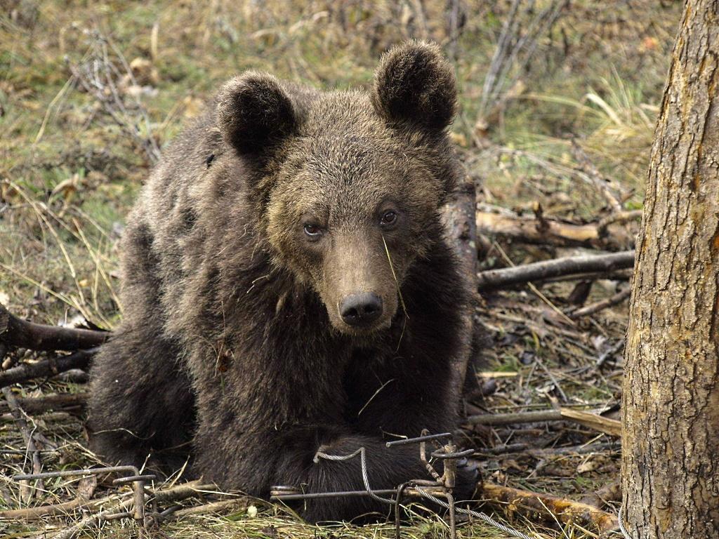 Снимка: WWF BG