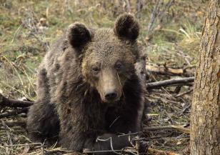 Как WWF спаси мечето Митко