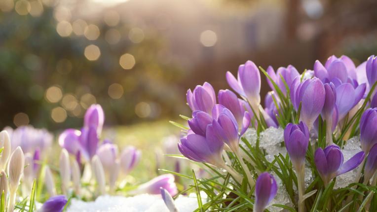 Изберете си картинка и разберете какво ще ви донесе февруари