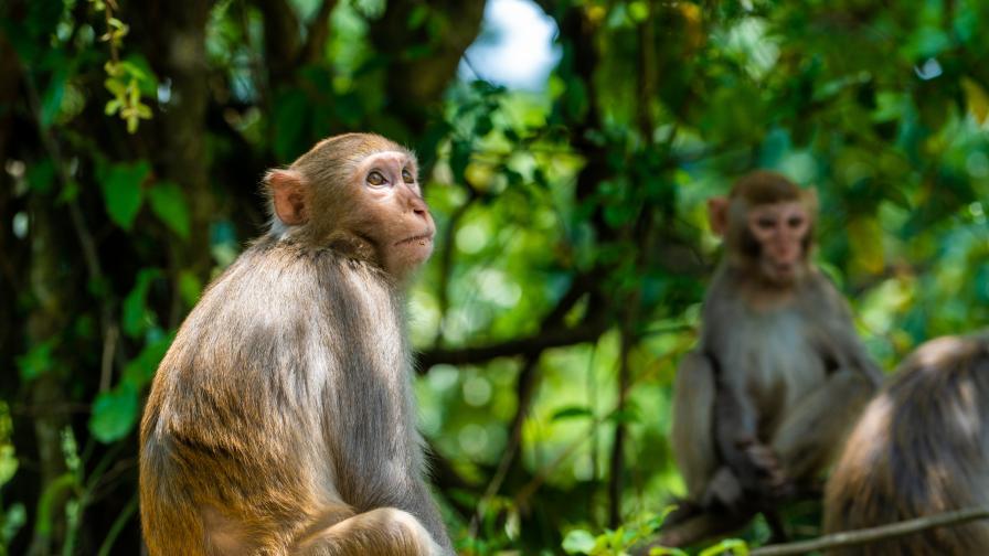 Маймуна пострада в зоопарка в София заради храна от посетители