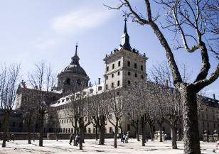 В Мадрид ще премахнат 80 000 повредени дървета