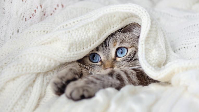 Избери си котка и разбери какво послание ти носи тя