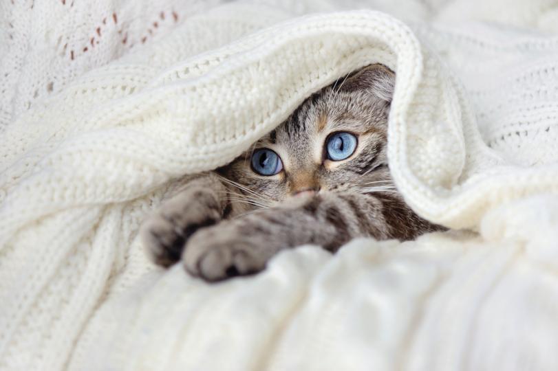 <p><strong>Котка 1</strong><br /> Вие сте съпричастен и внимателен човек, който цени чувствата, любовта и приятелството. Вие сте човек, който се опитва да има истинска и дълбока връзка. Не обичате повърхностни и нерешителни хора. Вие сте уникални и можете да кажете, че сте единствената по рода си душа. Вие сте много интуитивен и понякога ексцентричен. Вие сте много емоционални, винаги печелите уважението на другите и винаги виждате ясно тъмните и светлите страни на живота.</p>