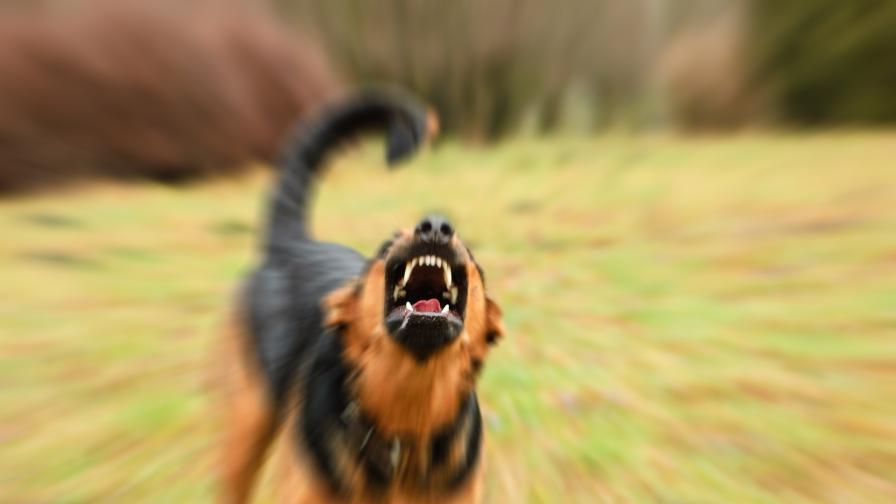 Куче напада хора в село Друган