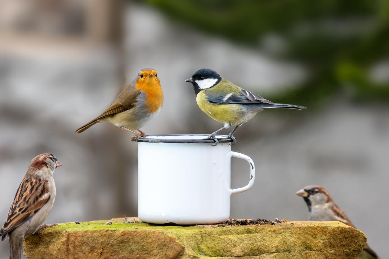 <p><strong>Птиците работят като &bdquo;бавачки&ldquo; и се надяват на наследство -&nbsp;</strong>Учените забелязват, че някои моногамни птици помагат на други птици да се грижат за децата си, вместо да имат свои собствени. Правят го с цел да получат наследство, когато малките пораснат, те напускат гнездото си, търсейки нов дом. Очаква се, че освободената територия наследяват птиците, които влизат в роля на &bdquo;детегледачки&ldquo;. Изглежда, че птиците знаят как да създават бизнес отношения.&nbsp;<br /> &nbsp;</p>