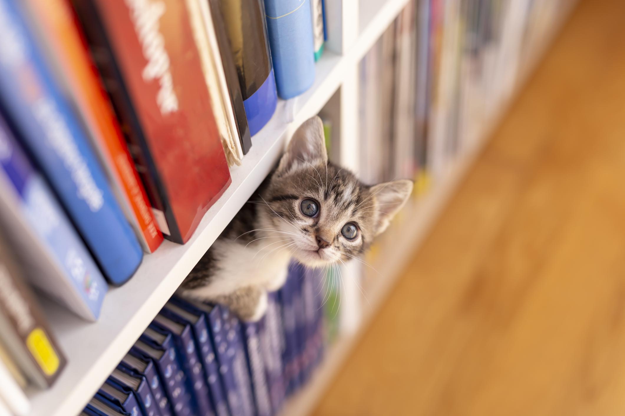 <p>Подредете книгите си - хубаво е книгите да стоят с кориците навън, за да откривате по-лесно тази, която търсите, а и така ще създадете усещане за уют. Не ги подреждайте и прекалено близо една до друга, както и не запълвайте цели рафтове с тях от край до край - оставяйте по малко пространство.</p>