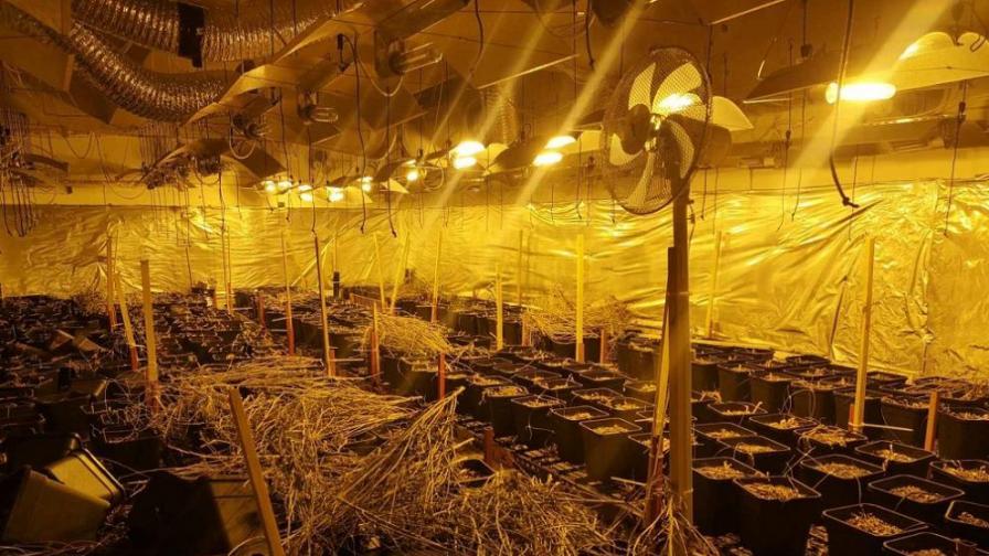 Разкриха две лаборатории за марихуана в Пловдивско