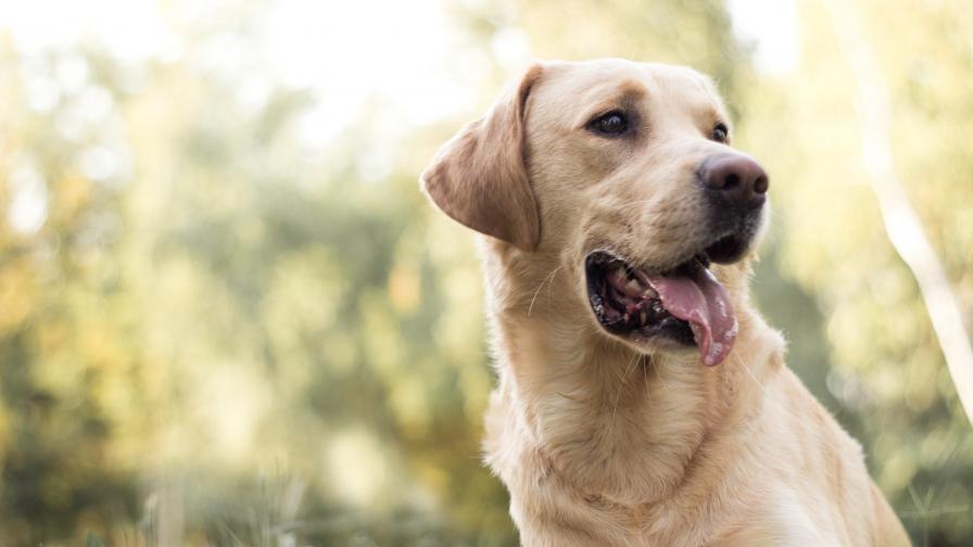 Коя порода кучета е идеална за теб според зодията ти