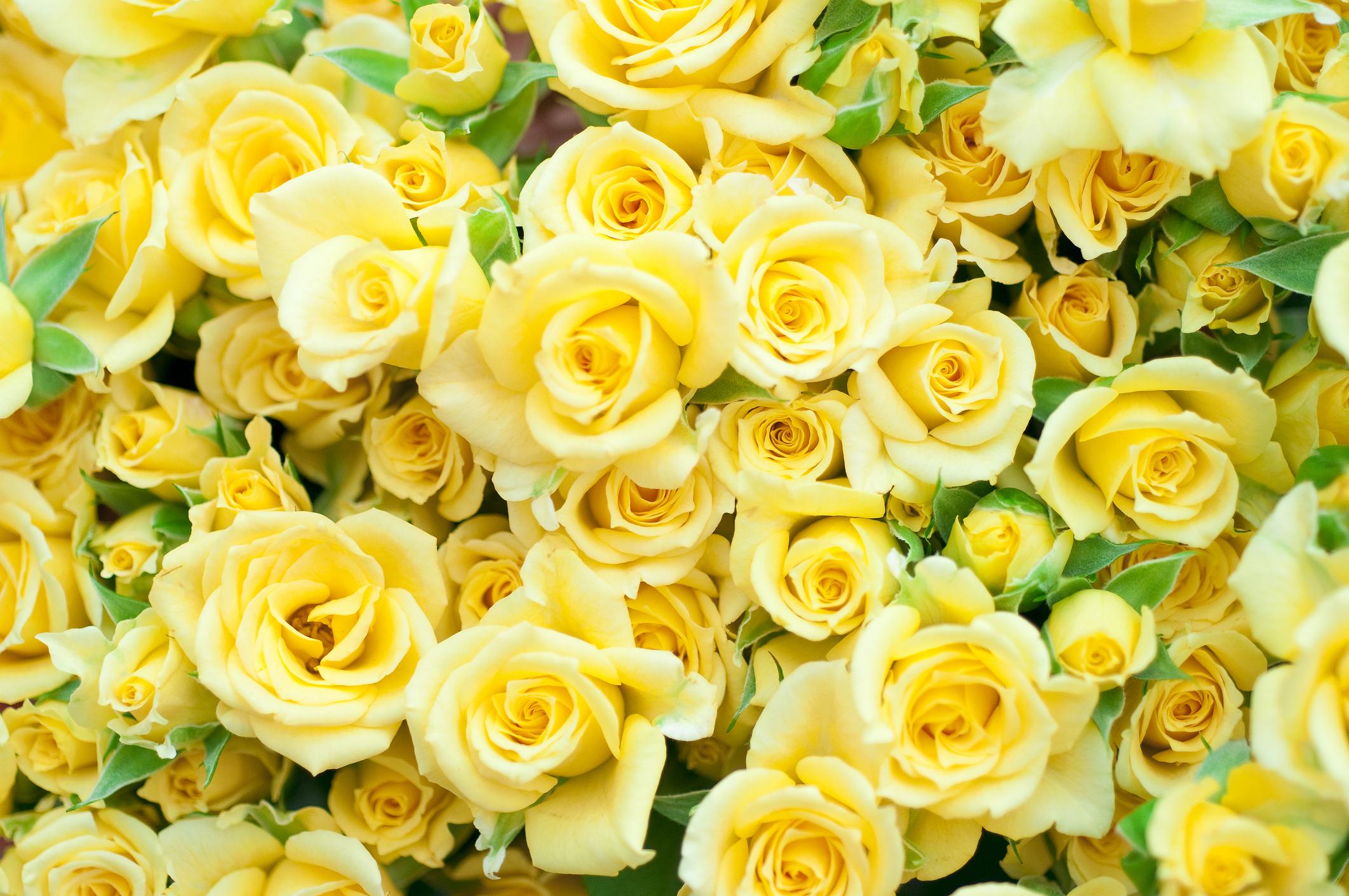<p>Жълта роза - може би не мислите, че е жестоко да подарите на някого жълти рози, но това слънчево цвете значи &quot;изневяра&quot;.</p>